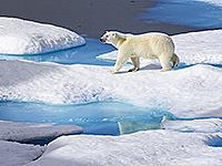 © Brent Stephenson / naturepl.com