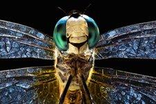 © Mark Alberhasky / Science Faction
