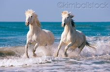 © Kimball Stock